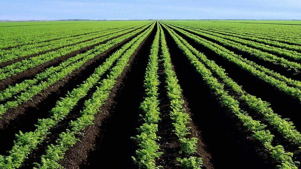 توريدات زراعية