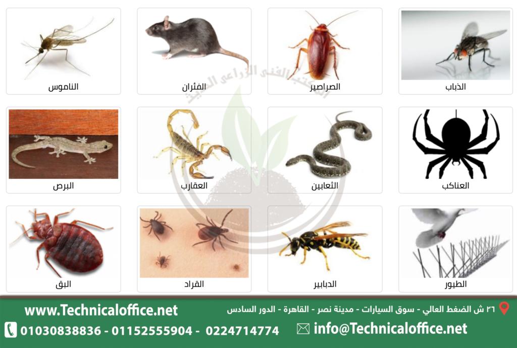 مكافحة الحشرات وطرد الطيور والقوارض