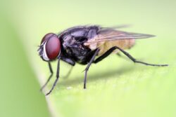 مكاقحة الحشرات الطائرة