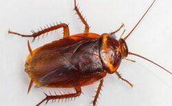 مكافحة الحشرات الزاحفة