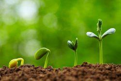 شتلات وبذور زراعية وأعشاب