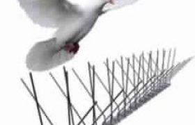 bird-spikes-to-prevent-birds-238x180